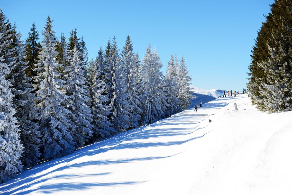 Відпочинок в Карпатах взимку Вілла Єлена
