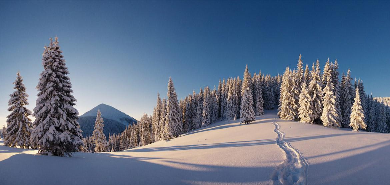 Зимний отдых в Буковеле