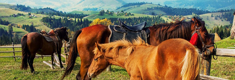 Конные прогулки в Буковеле